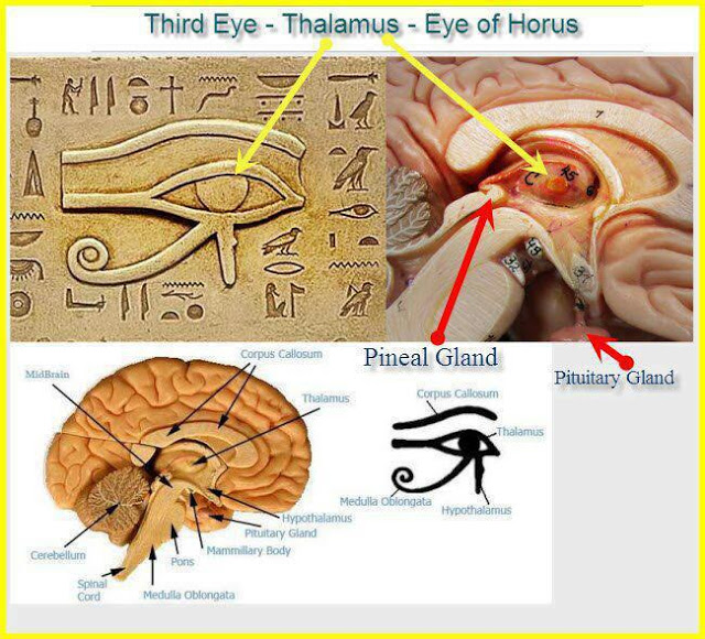pineal gland, 3rd eye, mystery of the pineal gland