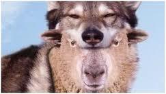 Sheepinwolfclothing