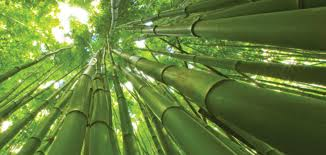 Parable of the Bamboo