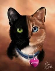 chimera-cat